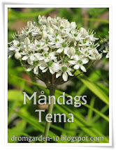 Måndags Tema
