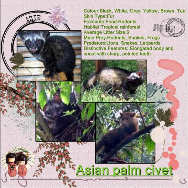 Jan.'16 Asian Palm Civet