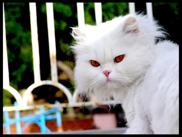 my adorable cat by pinkiwinkitinki from flickr (CC-SA)