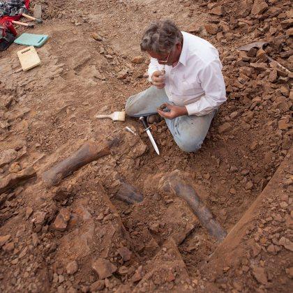 More dinosaur fossils found in NE Wyoming mass grave