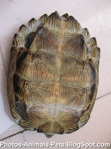 Turtle as pet