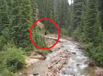 Colorado Bigfoot – hundreds of sasquatch sightings draw attention ...