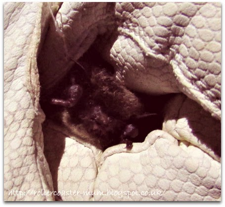 Whiskered Bat about to be released