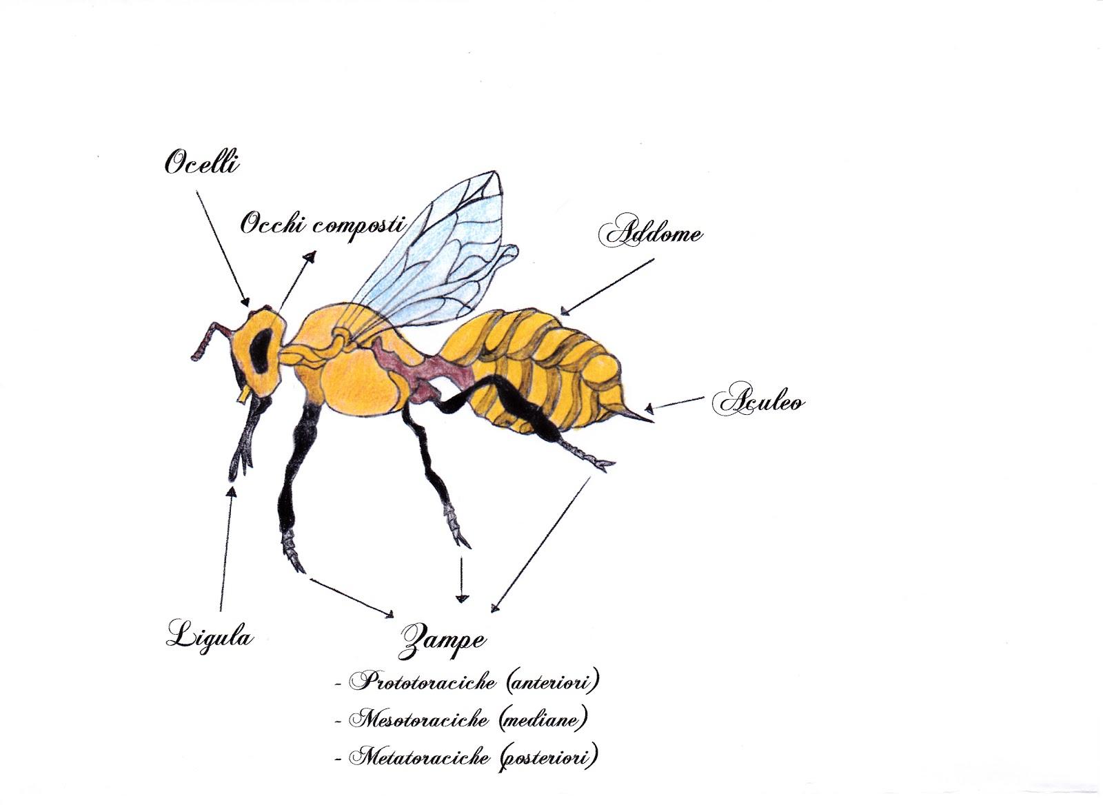 Terrafiorita il fantastico mondo delle api l for Immagini api per bambini