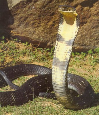 Serpientes mortales