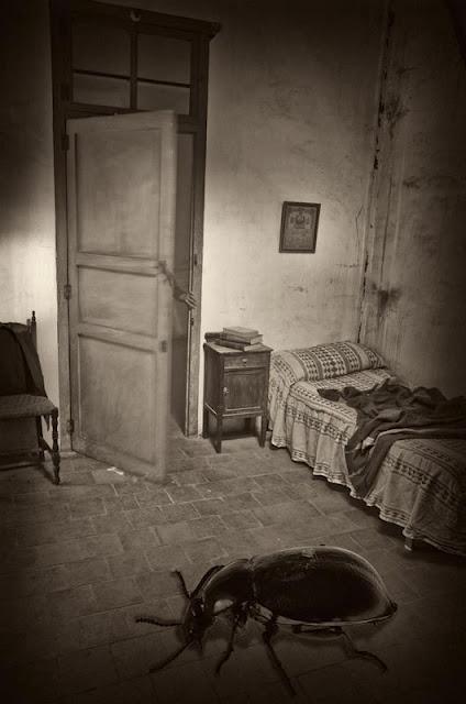 bugonias el despertar. Black Bedroom Furniture Sets. Home Design Ideas
