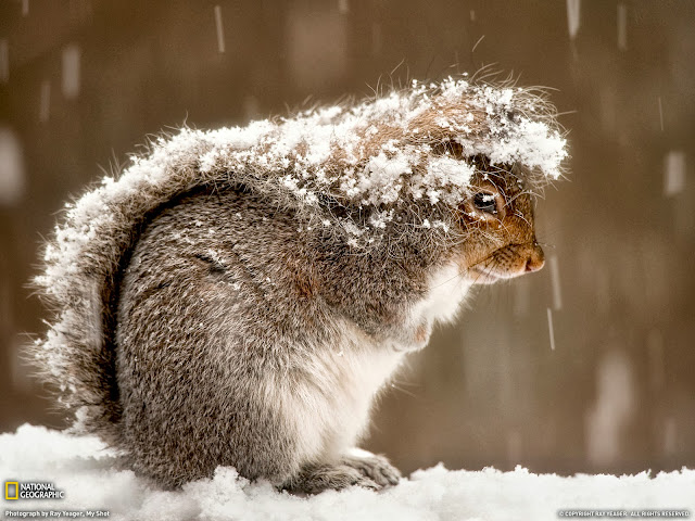 белка засыпана снегом
