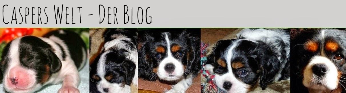 Caspers Welt - Der Blog