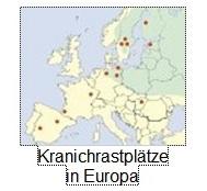 Grullas x Europa