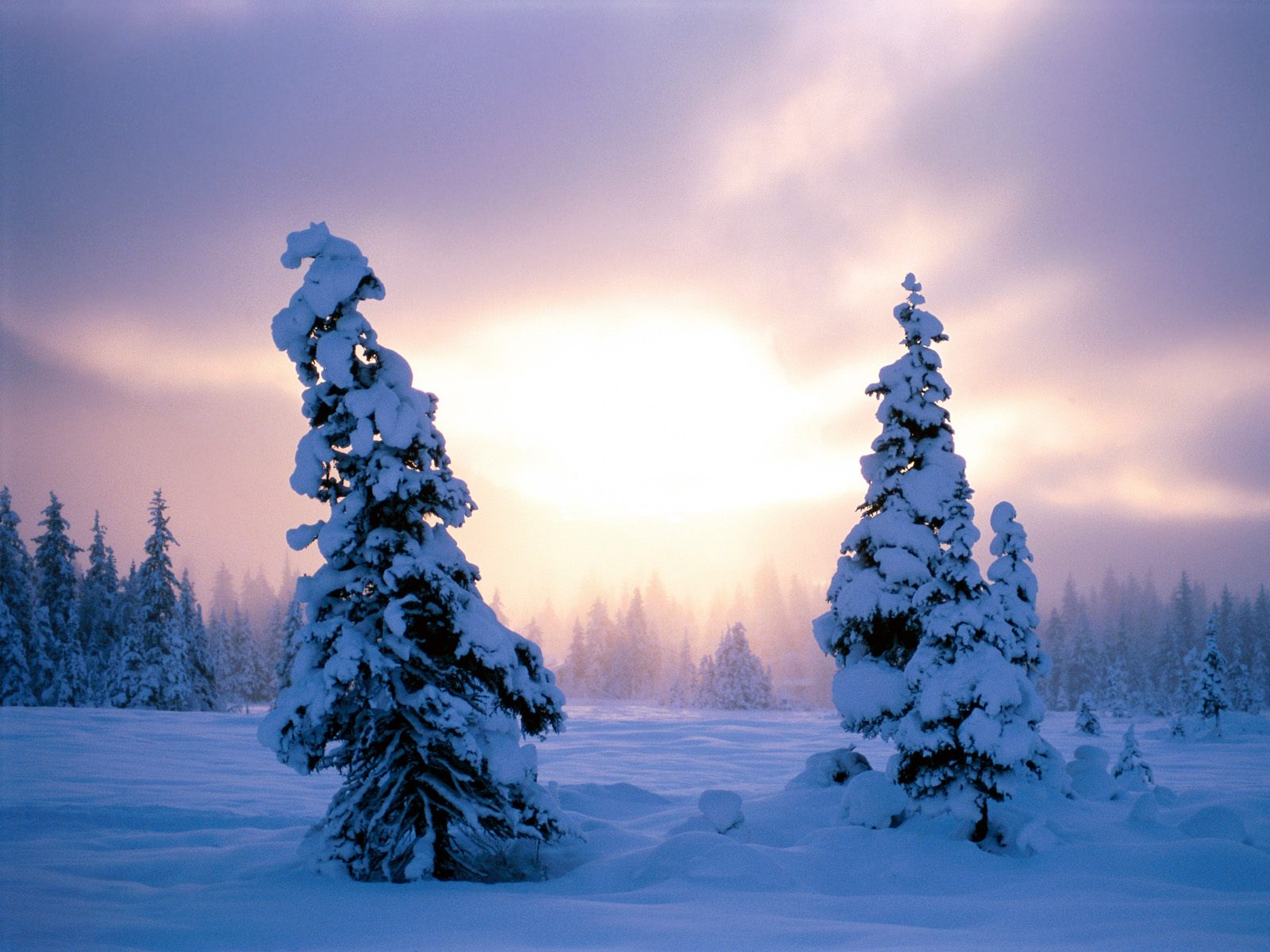 winter scene cool hq backgrounds and wallpapaers