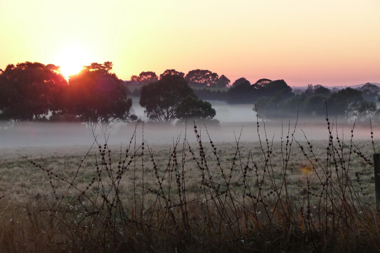 sunrise on a farm - Google Search | Cityscape | Pinterest