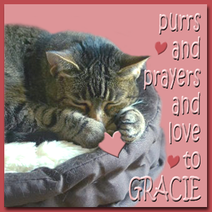 Get Well Purrrs for Gracie @Manxmews
