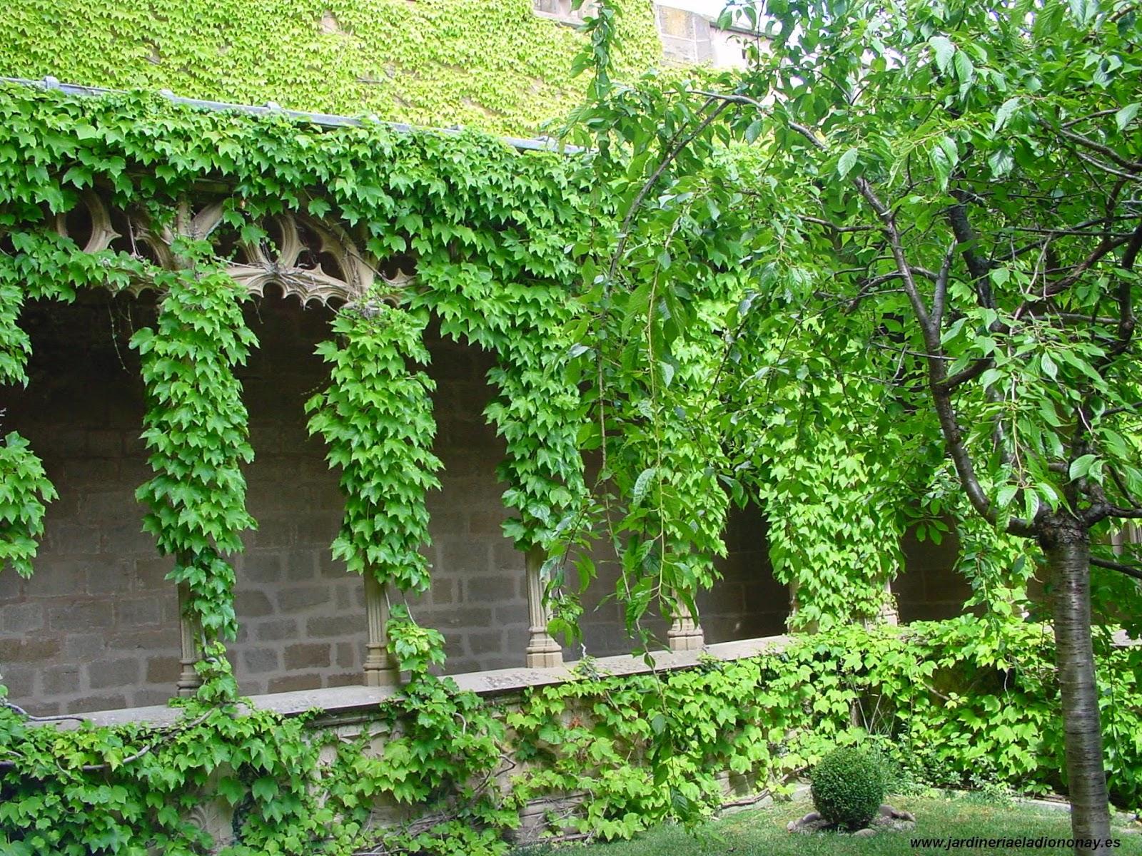 Jardineria eladio nonay el jard n de la reina jardiner a for Jardin de la reina granada