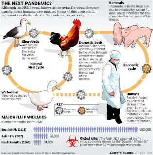 Avian Influinza