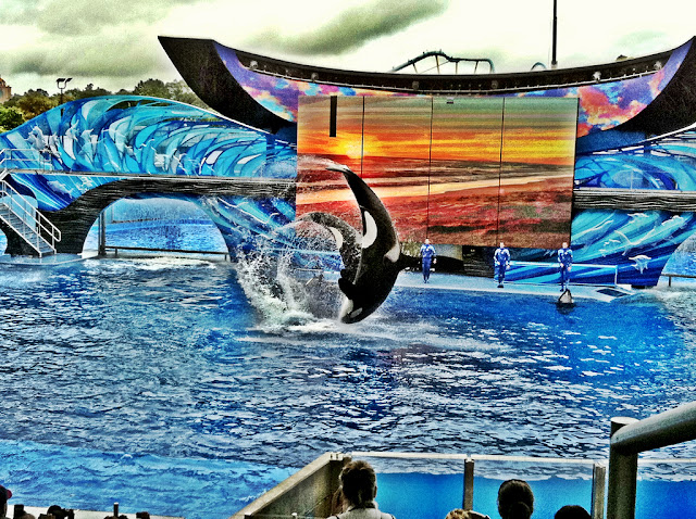 Seaworld | Orlando, Florida Trip Report | The Purple Pumpkin Blog