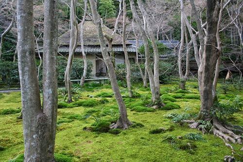 祇王寺(ぎおうじ)