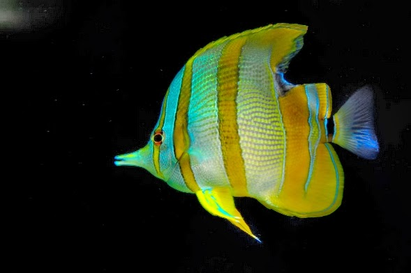 Foods and feeding of saltwater fish all aquarium info for Where to buy saltwater fish