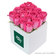 Rose Cube Pink16 with delivery