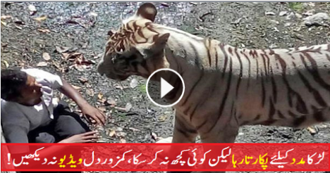 http://newtoyotacarspk.blogspot.com/2015/06/tiger-eating-boy-in-zoo-live-in-india.html