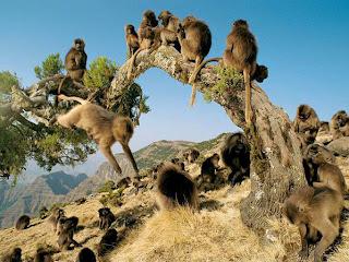 Kumpulan Foto Monyet