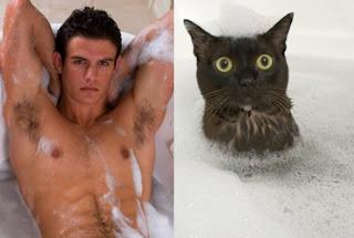 Foto Lucu Kucing Bergaya seperti Manusia