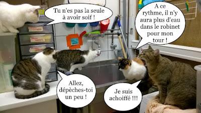File d'attente de chats pour boire !