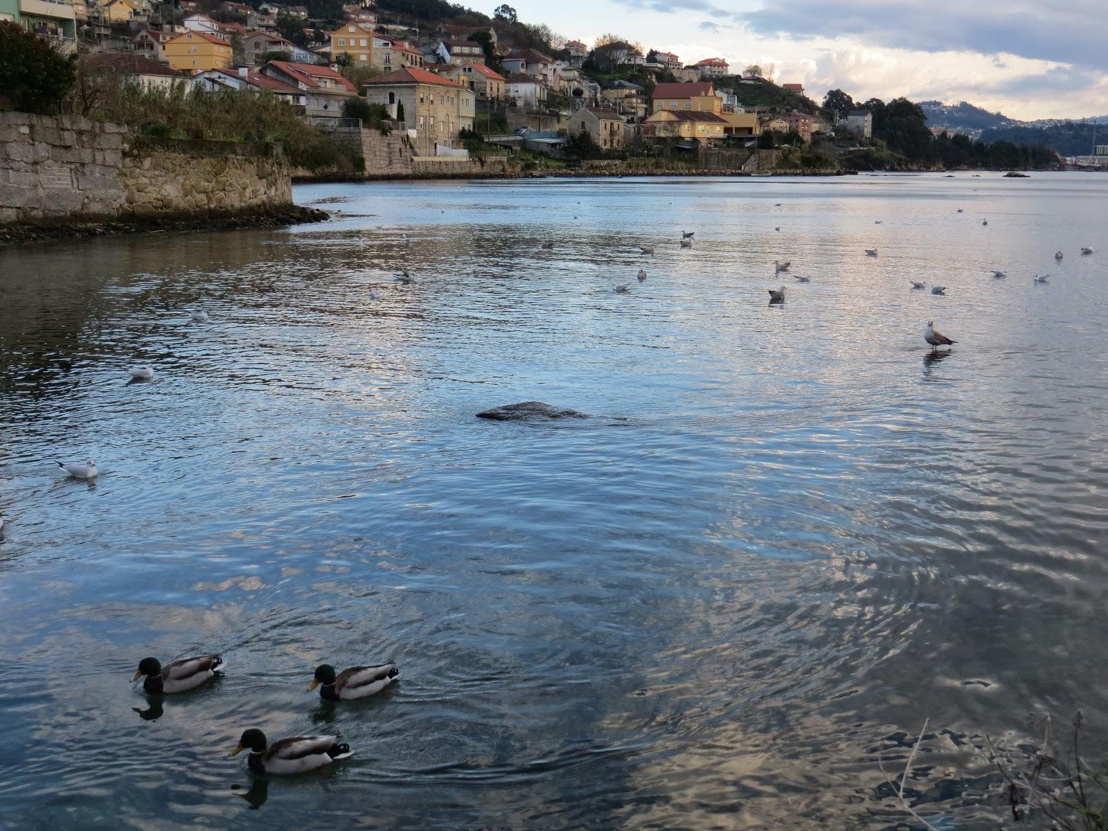 Turismo Ornitológico en Pontevedra