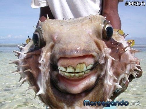 peixes com dente