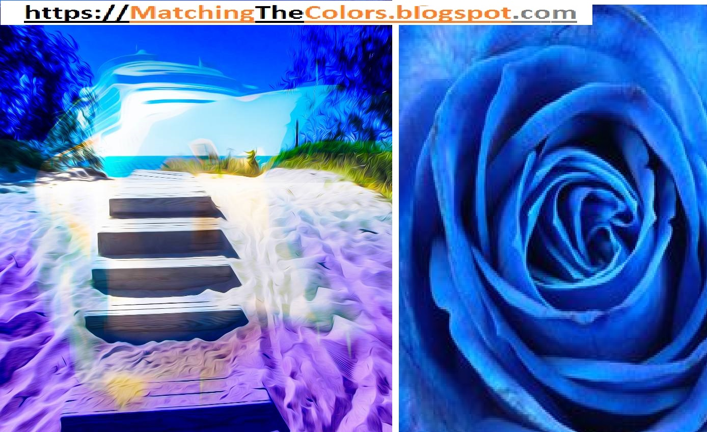 What Does A Blue Rose Mean What R U Know About Colors Meanings