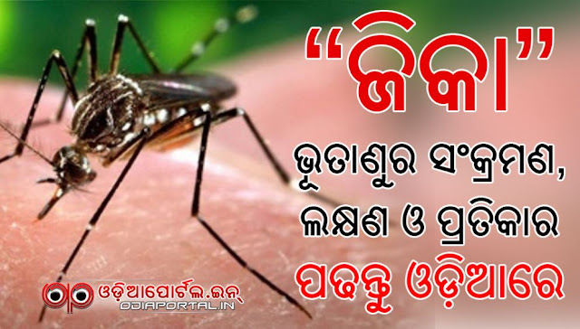 Know more about Symptoms, Diagnosis, & Treatment of Zika Virus. Zika virus infection is transmitted by an infected Aedes mosquito. Zika virus disease's most common symptoms are fever, rash, joint pain, red eyes, etc. Read in Odia language, be safe., zika virus symptoms, india zika virus, odisha,