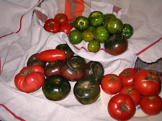 variétés de tomates anciennes à Aullène en Alta Rocca