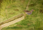 Prints, Greeting Cards, Posters of My Painting The Spotted Sandpiper on  the Kinnickinnic River