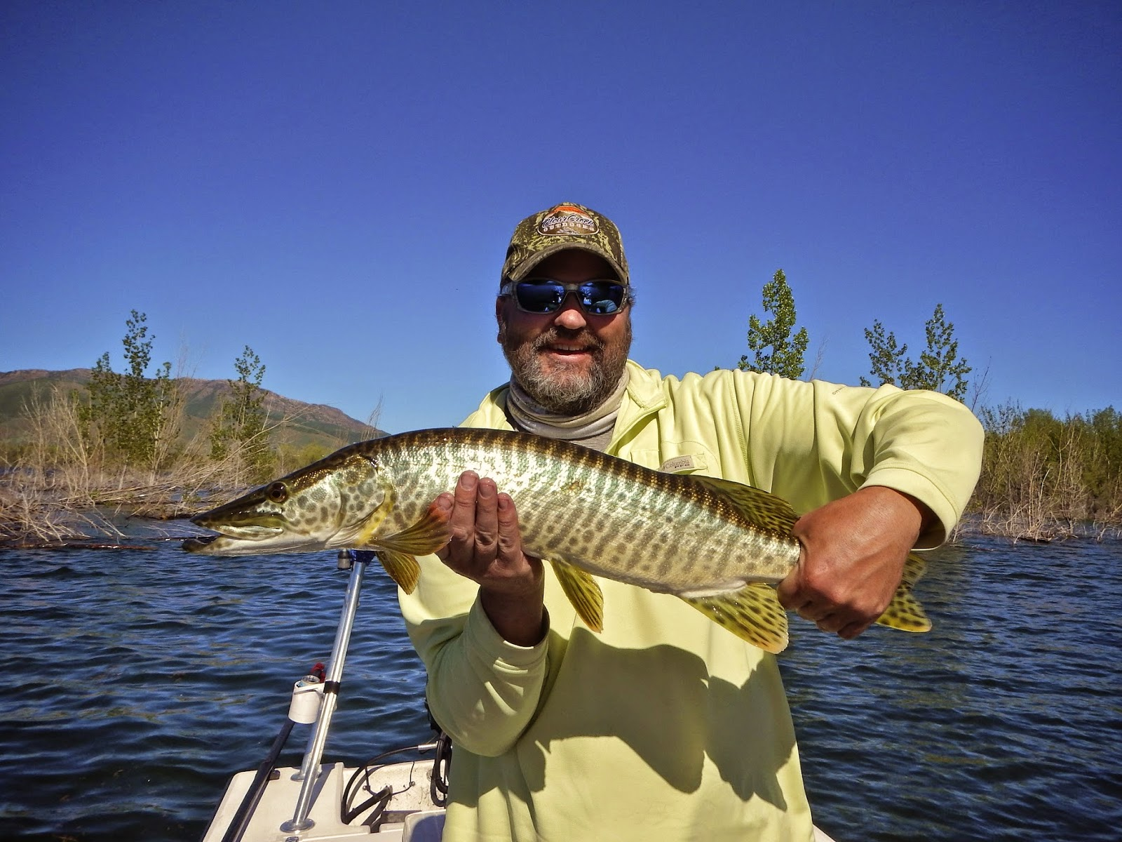 Colorado fly fishing blog tiger muskie for Tiger muskie fishing