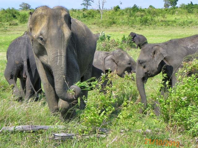 Safari en el Parque Nacional de Udawalawe