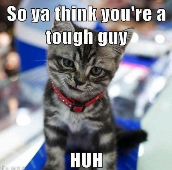 animal pictures with captions, so you're think you're a tough guy