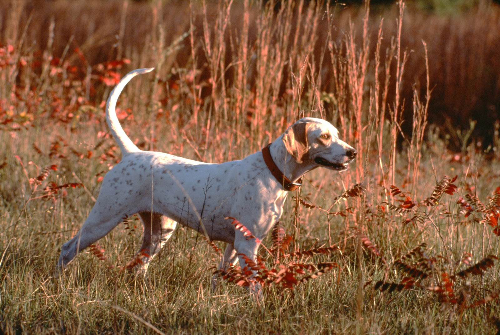 fss insider hunting dogs safety