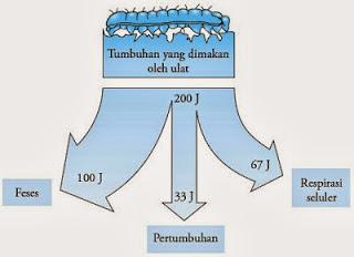 Gambar 5. pembagian energi pada salah satu tingkatan trofik rantai