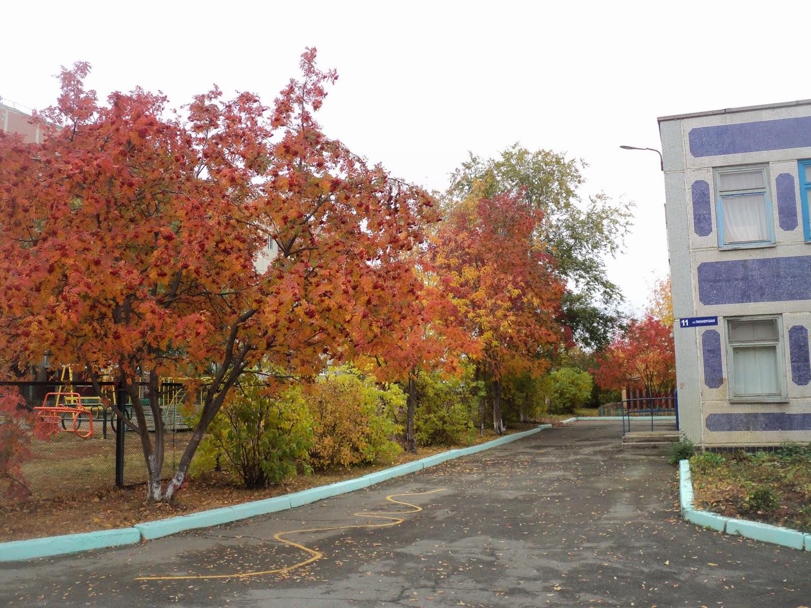 Детский сад золотая рыбка краснообск - 0c3f