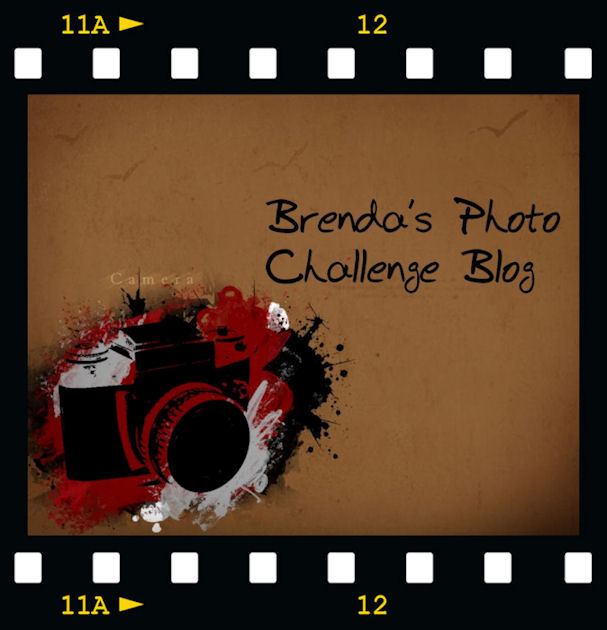 Brenda's Photo Challenge  Blog