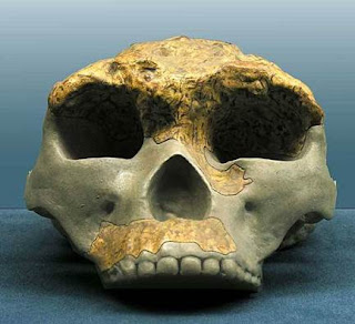 homo erectus lantian man