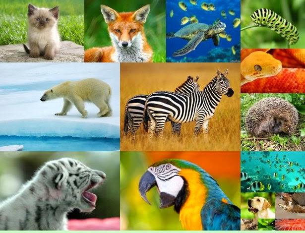 Вспомним животных
