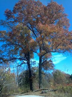 Twin Oaks Property Rentals Akron