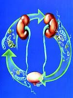 cara mengobati penyakit infeksi saluran kemih
