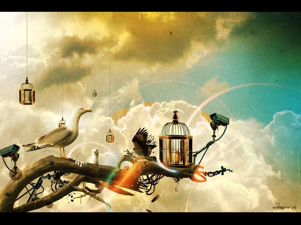 http://1.bp.blogspot.com/-X3R2q9HAFn0/Tka-2_hkYdI/AAAAAAAACFg/vuoEOEBDV10/s1600/cool-3d-birds-wallpaper_1024x768_58.jpg