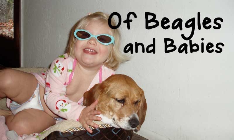 Of Beagles and Babies