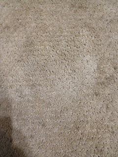 how to get dried dog poop stains out of carpet