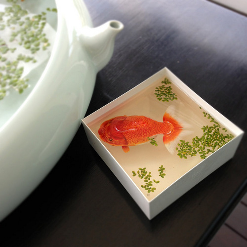 03-Ranchu-Keng-Lye-3D-Hyper-Realism-Resin-Acrylic-Painting-Sculpture-Alive-Without-Breath