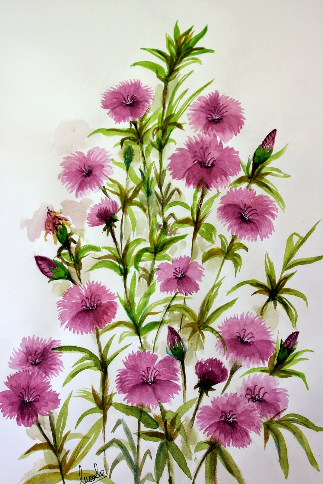 #Dianthus #purple #bouquet #bunch #flowers #watercolor #art #painting