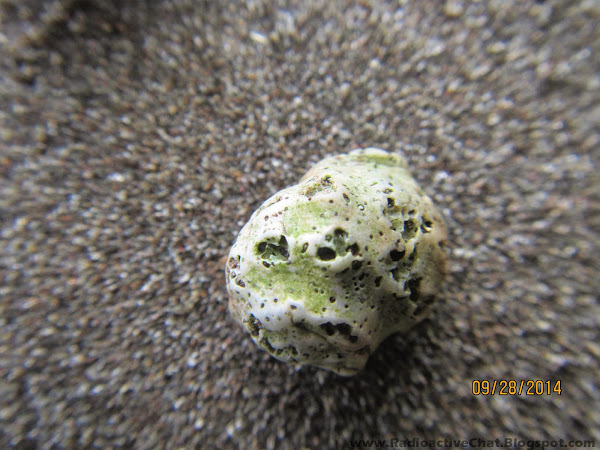 Mutated Hermit Crab Shells