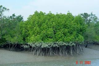 Sundarbans Khulna